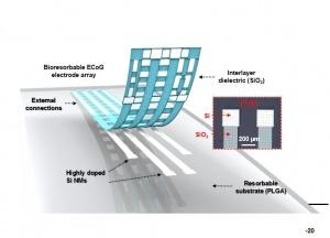 Flexible electrodes